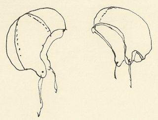 bredskygget hat med høj puld